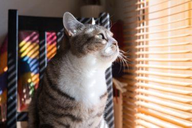 光や視線は遮りたいが、風通しは必要!窓を彩り光を操るアイテムえらび【ブラインド・スクリーン・シェード】